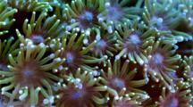 Coral Reef Macro Stock Footage