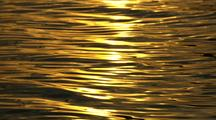 Water Ripples Backlit Rack Focus