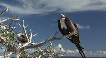 Frigate Bird Jib Reveal