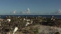 Seabird Colony On Beach