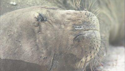 Monk Seal Trash On Beach