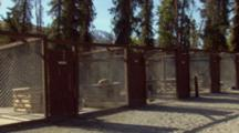 Zoom Out From Denali Mt Mckinley To Sled Dogs Sleeping In Sun On Top Of Dog House.