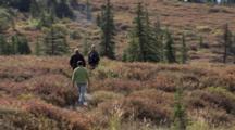 Alaska Tundra Stock Footage