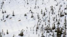 Zatzworks Cineflex Aerials Of Wolves On Alaska Kenai Penninsula