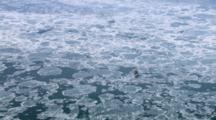 Zatzworks Cineflex Aerial Of Offshore Oil Rig Oil Drilling In Icy Frozen Water In Cook Inlet Alaska Arctic Oil Drilling
