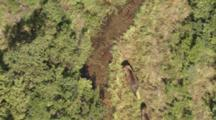 Cineflex Aerial Of Brown Bear And Cub Walking In Grass Near Lake Iliamna And Proposed Pebble Mine Area