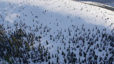 Aerial Over Vast,Forested Wilderness With Distant Mountain Range