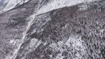 Aerial Evergreen Forest Blanketed In Snow