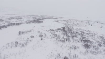 Aerial Desolate Snowy forest Landscape