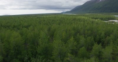 Aerial Over Coniferous Forest and River to Coast