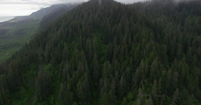Aerial Over Coniferous Forest In Alaska