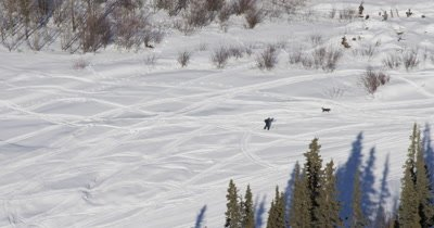 Aerial Over Snow Field and Person Cross Country Skiing with Dog Near Houses