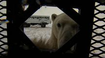 Polar Bear Sticks Nose At Camera Approaches Camaera Unwelcome Visitors