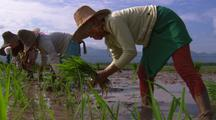 Stock Footage of Traditional Farming