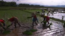 Rice Farming In China Planting Rice Agriculture Food Production