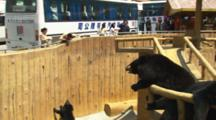 Beijing China Chinese Tourism Sloth Bear