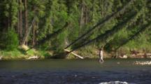 Interior Alaska Forest Flyfisherman Flyfishing Alaska Reveal Wide Shot