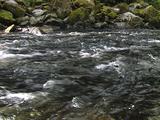Salmon In Southeast Alaska Tongass