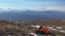 Dall Sheep And Wildlife Viewer Watching Animals Ecotourism Travel Alaska Outdoor Adventure