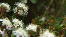 Alaska tundra flower spring summer alaska landscape flora
