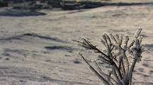 Tilt Up From Frozen Plant To Reveal Alaska Arctic Bush Community Anaktuvuk Pass
