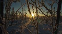 Alaska Arctic Mid Winter Sunset Behind Snowy Forest Super Cold, Freezing, -40f