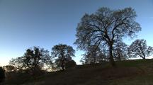 Oak Trees On Hill, Bright Blue Sky