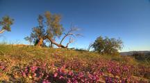 Desert Wildflowers And Shrubs