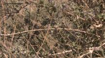 Hummingbird In Desert