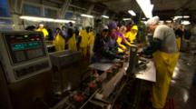 Workers Sort Canned Salmon In Fish Processing Plant