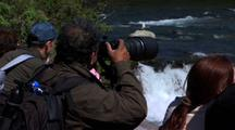 Toursim Viewing Brown Bear Grizzly Bear  Alaska Ecotourism Travel Wildlife Viewing Nature