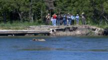 People Watching Brown Bears Fish In Stream Brooks Falls Alaska