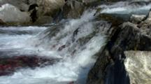 Pan Over Thousands Of Brilliant Red Sockeye Salmon Struggle To Jump Up Waterfall End Of Life Beginning Of Life Life Cycle