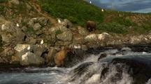 Scenic Wide Then Zoom To Brown Bear Grizzly Bears Snag Fish At Rocky Waterfall As Red Salmon Continuously Jump Falls In Foreground