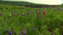 Wildflowers On Alaska Tundra Tight Slow Pull To Wide Shot With Low Fog Slight Breeze