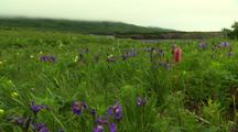 Wide Shot Static Of Wildflowers In The Breeze On The Alaska Tundra