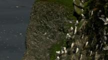 Cliffside Pribilof Island Seabird Rookery