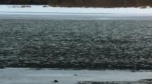 A Common Goldeneye Emerges And Dives Into Shimmering Winter Water With Ice In Foreground And Background