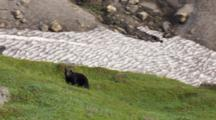 Shiny Black Bear On Green Ridge Top With Wildflowers In Front Of Waterfalls Exnice