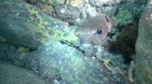 Big Porcupinefish And Squirrelfish In A Cave