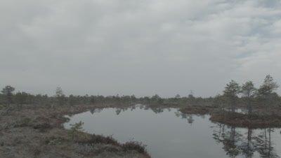 Marsh lake with Common gulls Larus canus