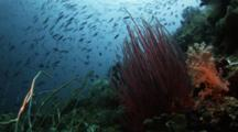 Sea Whips Stand Out On Reef
