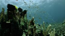 Crinoids On Top Of Hard Coral