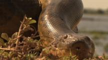 Amazon: Crawling Anaconda