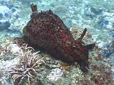 Sea Hare Feeding