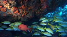 Underwater Seychelles Stock Footage