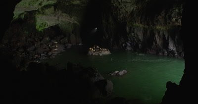 Steller Sea Lions (Eumetopias jubatus), Breeding Cave