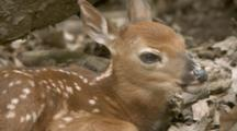 All Baby Animal Stock Footage