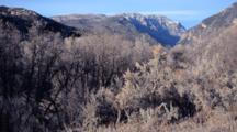Scrub Oak, Black Canyon