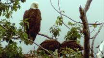 Eagles Nest, Young Feed
